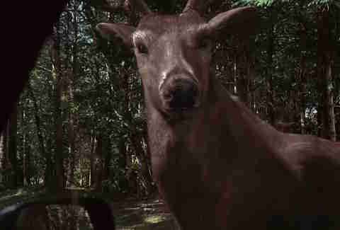 The Ring Two, Deer, CGI Animals