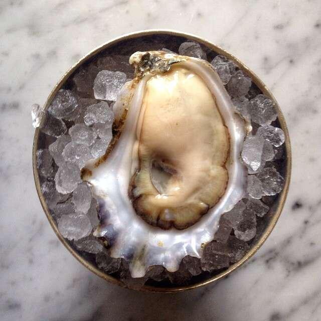 Kimball House, oyster
