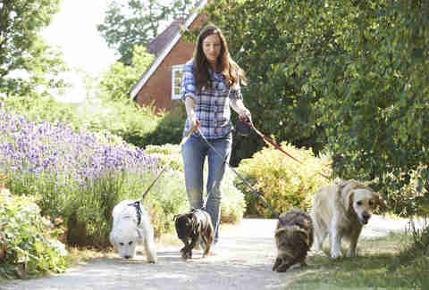 woman walking four dogs