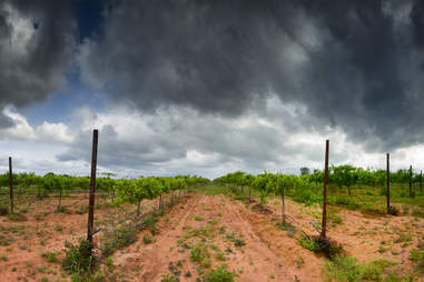 texas vineyard