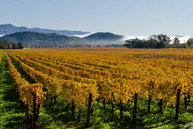 Napa Valley, CA vineyard