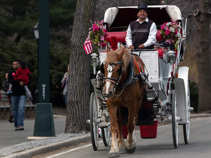 Horse and carriage driver in new york
