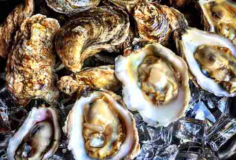 Goin' Coastal oysters