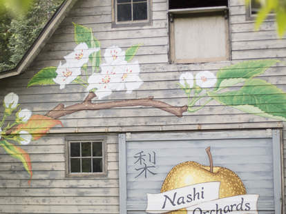 Nashi Orchards
