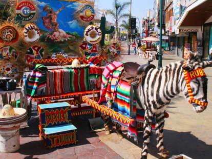 donkey zebra in Tijuana, Mexico