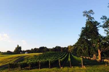 Greenhill winery, Virginia