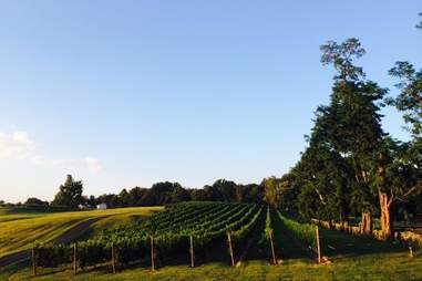 Greenhill winery, Virginia