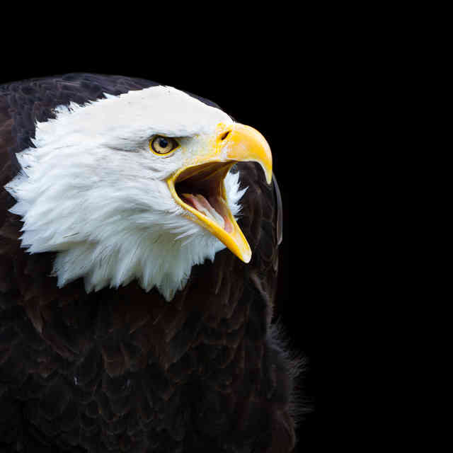 Canada Out-Americas America (Again!) With Bald-Eagle Beer Delivery