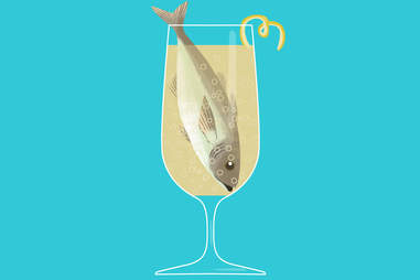 Pisces fish in a death in the afternoon champagne cocktail