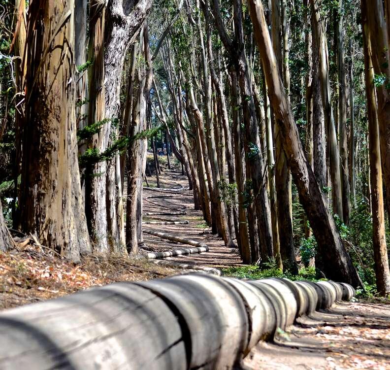 presidio woods san francisco