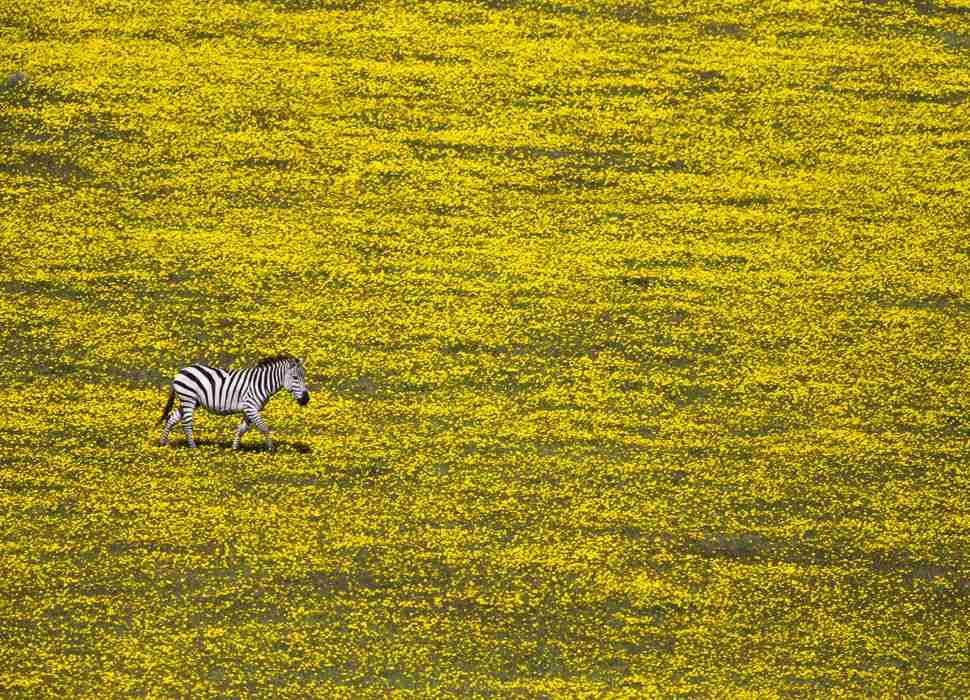 Serengeti National Park National Geographic