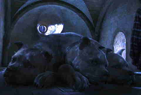Name Of Three Headed Dog In Harry Potter