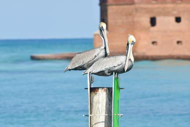 Birds Dry Tortugas birdwatching