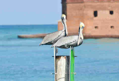 Birds Dry Tortugas birdwatching