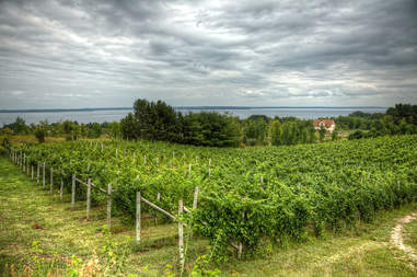 Wineries in Leelanau County in Northern Michigan