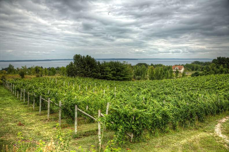 Wineries in Leelanau County in Northern Michigan
