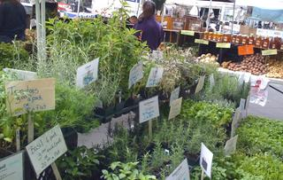 Tribeca Greenmarket