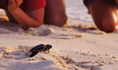 seat turtles hatching