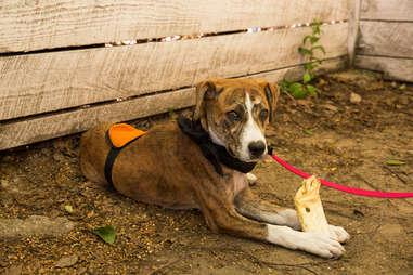 Brooklyn animal rescue