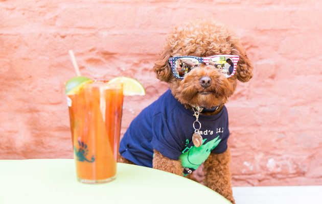 Here's What Happened at NYC's First-Ever Puppy Brunch