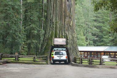 Chandelier Drive-Thru Tree in SF