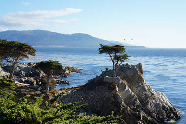 The Lone Cypress in California