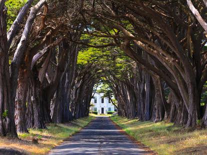 Cypress tree tunnel in California