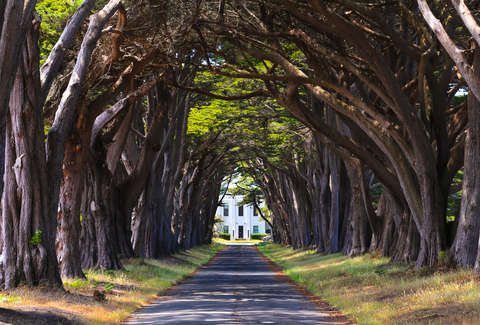 Cypress tree tunnel in California