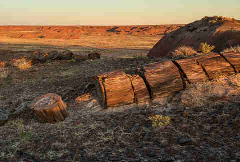 A petrified forest in California