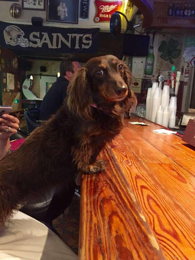 dog in bar