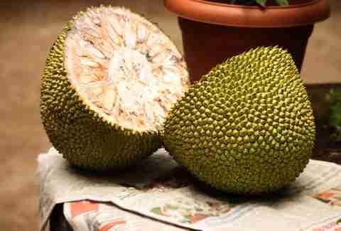 how to cook jackfruit like pulled pork