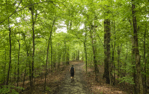 The Most Beautiful Memphis-Area Hikes We'll Be Taking This Summer