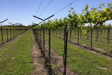 Texas Southwind Winery