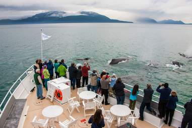 Whales on small Alaska cruise