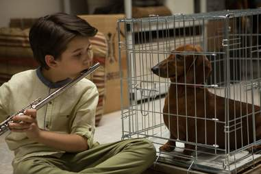 wiener-dog - best movies of the year