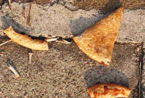 pizza on ground