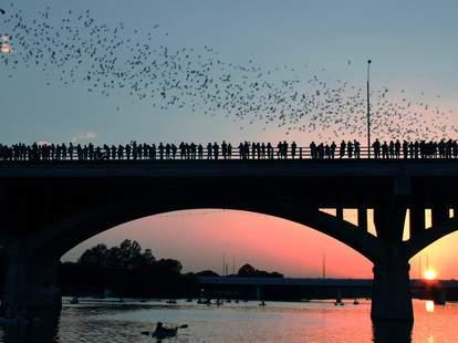 Congress Ave Bridge bats in Austin