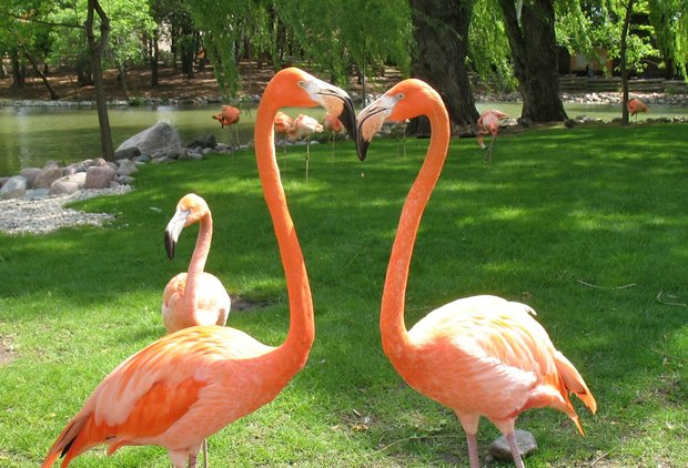 Gay Flamingo Couple Raises Well-Rounded Flamingo Child in Zoo Atlanta