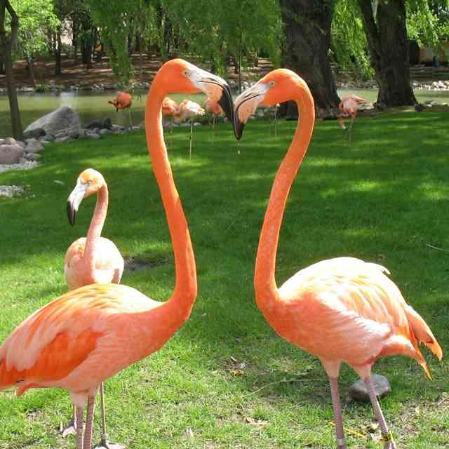 Gay Flamingo Couple Raises Well-Rounded Flamingo Child in Zoo Atlanta