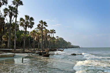 a grove of palm trees lining a beach at high tide