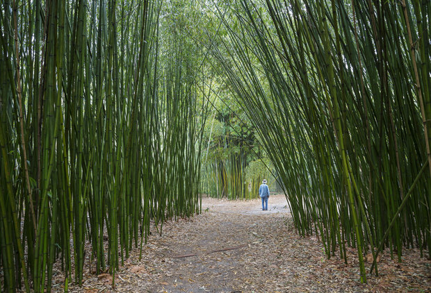 The 15 American Cities With the Best Botanical Gardens