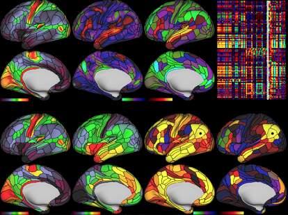 new brain map