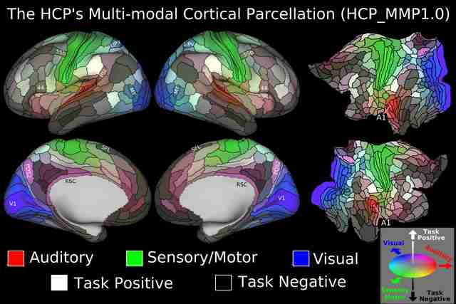 Most detailed map of the brain