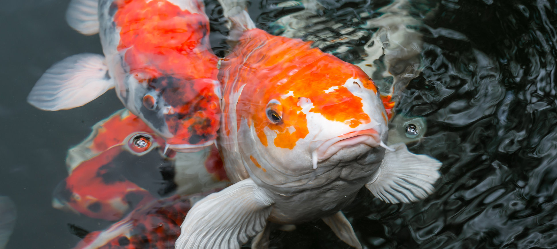 This Will Make You Think Twice About Eating Seafood