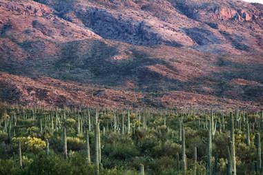 Saguaro National Forest Arizona
