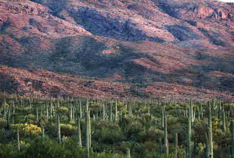 Saguaro National Forest Arizona