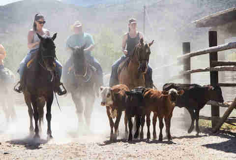 People riding horses herding cows Arizona