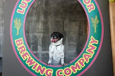 Lucky Labrador Brewing Company