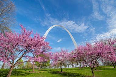 St. Louis Arch redbuds