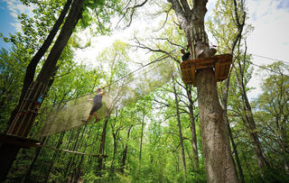 Go Ape! Chicago